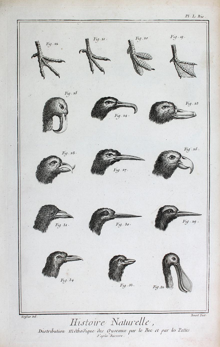 Berühmt Männlich Vogel Anatomie Galerie - Menschliche Anatomie ...